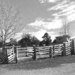 Timber Cattle Yard Eastern Side
